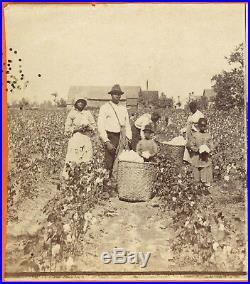 Black Cotton Pickers In Cotton Field Savannah Georgia Stereoview By J. N. Wilson